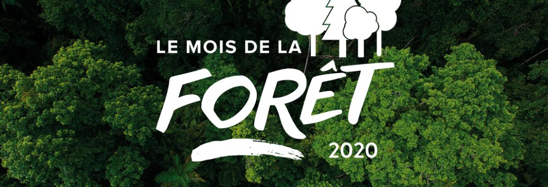 Plantons des arbres en mars : le mois de la forêt !
